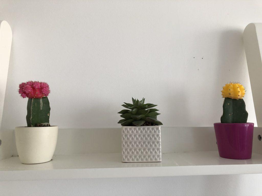 Home Decor – Cactus Addiction graphic